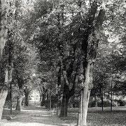 Aschersleben  1959  Thälmannpark