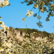 Rodenstein mit Kirschblüte, Walberla | © Bernhard Thum, Bild-ID WI-04-2014-002