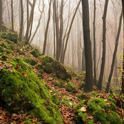Herbstwald im Trubachtal | © Bernhard Thum,Bild-ID BA-XX-20XX-000