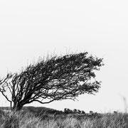 rubjerg knude, dänemark