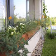 Fensterkisten mit duftiger Bepflanzung