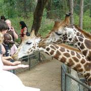 Girafe in Bamburi Nature Trail