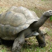 Turtle im Haller Park