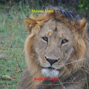 Lion in Massai Mara