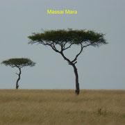 Akazie Massai Mara