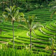 Reisterrassenlandschaft von Jatiluwih