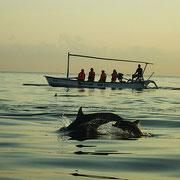 Delphintour am frühen Morgen