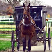 Horse-drawn wagon, oftwel: een buggy