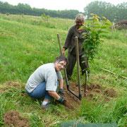 2012 - Plantation du verger - 40 fruitiers - variétés anciennes