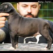 Maschio 4