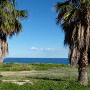 Stellplatz zwischen Palmen