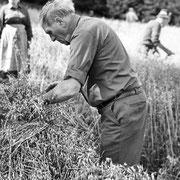 Wilhelm Belke-Bockheim beim Garben aufnehmen und binden