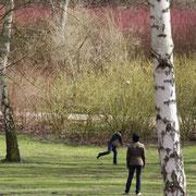 Ball spielen zwischen den Birken im März, die Äste der Sträucher im Hintergrund sind rot und grün. Foto: Helga Karl