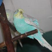Lola kratzt sich  Februar 2011