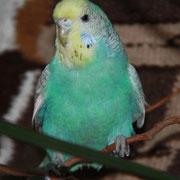 Lola mit ca. 3 Monaten