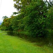 フツーの雑木林なのに道路脇までその洪水は迫っていたんだな。