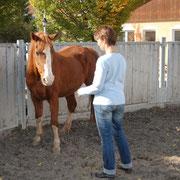 Sie stellt Kontakt zum Pferd her.