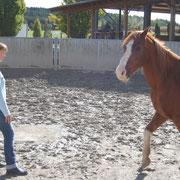 Das Pferd ist unruhig. Ein Hinweis, dass sie Gefühle verdrängt.
