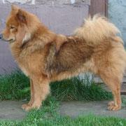 Annie 1,5 Jahre