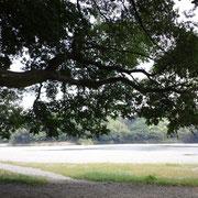 竹林の日陰から川を望む