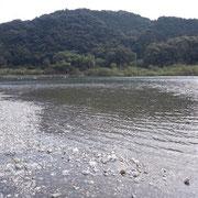 川辺の風景です