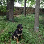 Antonia beim spazieren gehen in unserem Schloßgarten