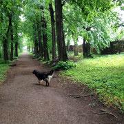 Antonia beim spazieren gehen in unsrem Schloßgarten