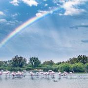 Banque image Provence - camargue - Flament rose - Arc en ciel