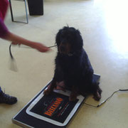 Belcando Aktionstag mit Hundewaage