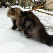 Kuisma dans la neige