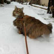 Orage dans la neige