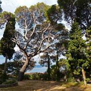 Einer meiner Lieblingsbäume in dem kleinen Gärtchen der Kapelle