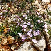 Die Blumen kämpfen sich einen Weg durch das Gestein
