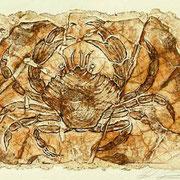 Carborundum-Radierung:  Krabbe, versteinert