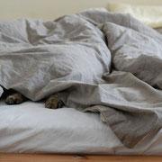 Bettdecken waschen und pflegen
