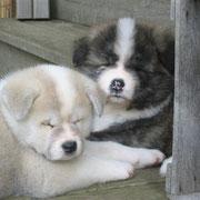 Keko und Kiro