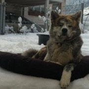 Kimo (Ezochi), 2 Jahre alt