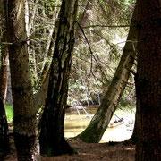 Oberes Waldviertel