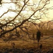 Morgendämmerung in der Heide, die Sonne durchdringt den leichten Morgennebel und taucht die Landschaft in ein unwirkliches Licht
