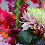Löwenmaul, Chrysantheme, Limonium
