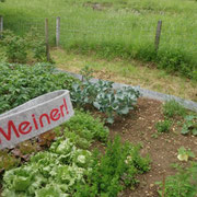 Goodbye anstrengender aber unbezahlbarer Gemüsegarten