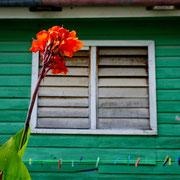 CAYE CAULKER ISLAND [BELIZE]