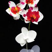 orchidées de soie teintes ou unies