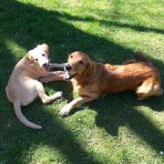 Enya und Ginger Frühjahr 2014