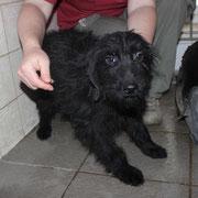 Böbi, 2 Jahre, liebes kleines Hundemädchen