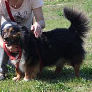 Picúr, Rüde, 4 Jahre, sehr lieber keiner Hund