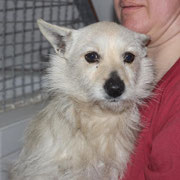 Lotti, 2 Jahre, süßes kleines Hundemädchen, Schwester von Lotte