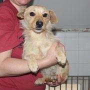 Lotte, 2 Jahre, süßes kleines Hundemädchen, Schwester von Lotti