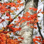 ひだ清見の風景 おおくら滝の紅葉