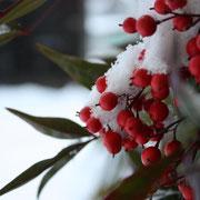 ひだ清見の風景 ナンテン 雪